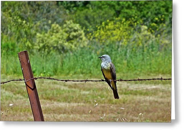 Tropical Kingbird Greeting Card