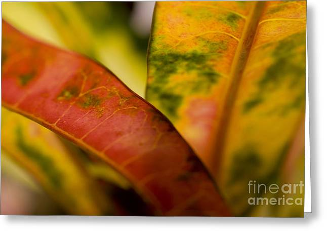Selective Soft Focus Greeting Cards - Tropical Leaf Abstract Greeting Card by Ray Laskowitz - Printscapes