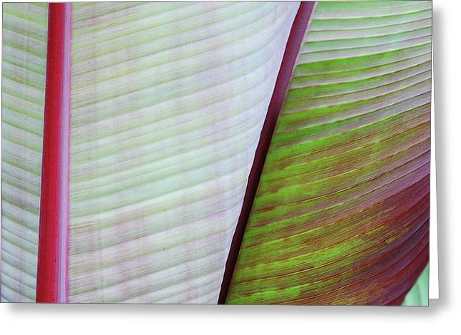 Tropical Leaves No 5  2009 Greeting Card