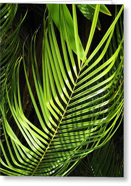 Greeting Card featuring the photograph Tropical Palm by Carol Sweetwood