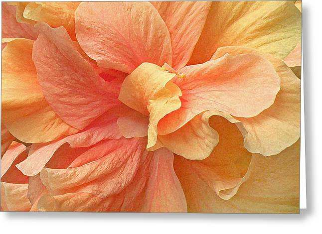 Tropical Peach Hibiscus Flower Greeting Card by Deborah Smith
