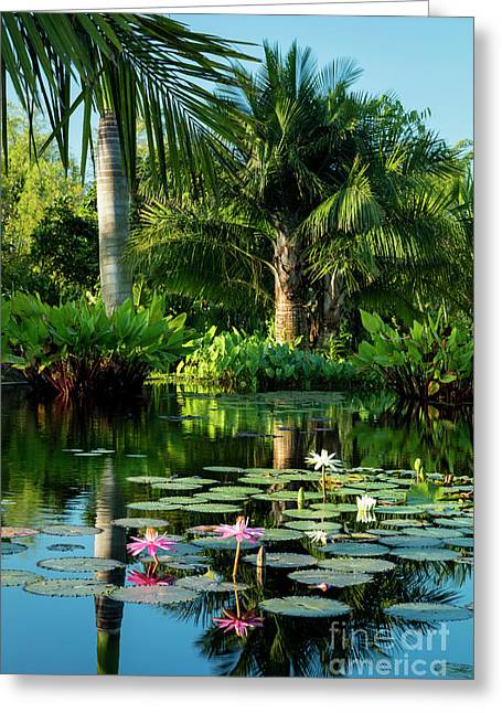 Tropical Pond Greeting Card