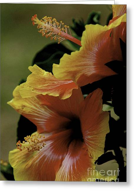 Greeting Card featuring the photograph Tropical Punch by Lori Mellen-Pagliaro