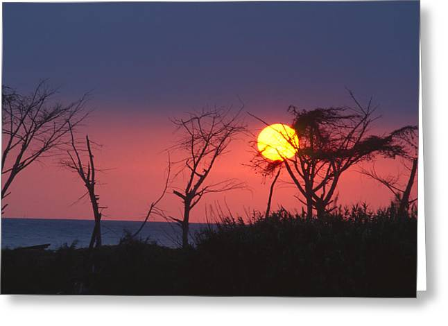 Tropical Punch Greeting Card by Soli Deo Gloria Wilderness And Wildlife Photography