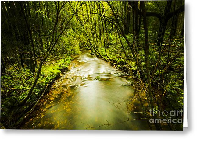 Tropical Rainforest Stream Greeting Card by Jorgo Photography - Wall Art Gallery