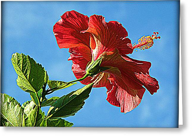 Tropical Red Hibiscus  Greeting Card by Rose  Hill