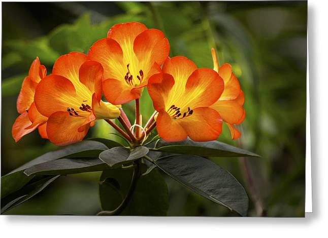 Tropical Rhododendron Greeting Card