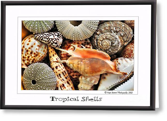 Tropical Shells... Greeting Card Greeting Card by Kaye Menner