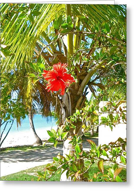 Tropical Spring Flower Greeting Card
