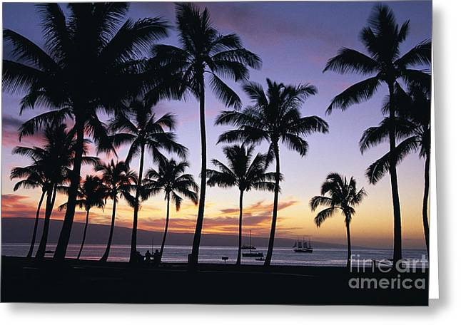 Tropical Sunset Greeting Card by Bill Schildge - Printscapes