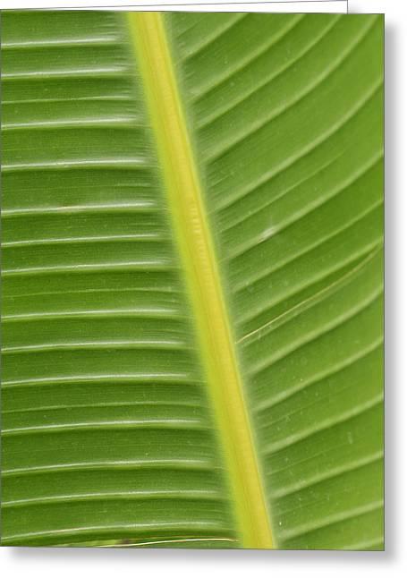Tropical Tracks Greeting Card