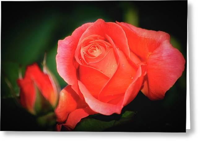 Tropicana Rose Greeting Card