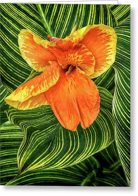 Tropicanna Beauty Greeting Card