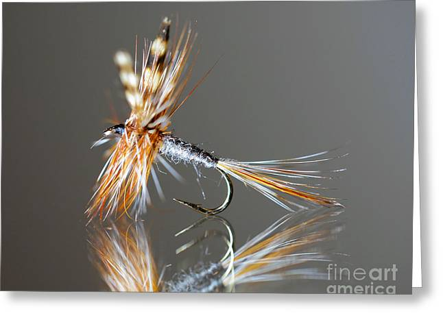 Trout Fly 2 Greeting Card