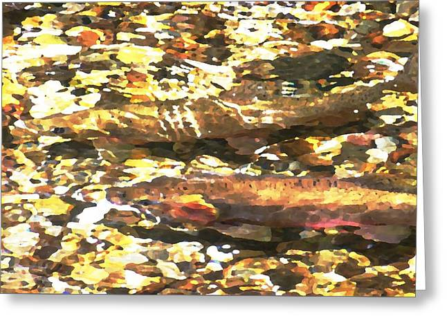 Trout Stream Greeting Card by Greg Hammond