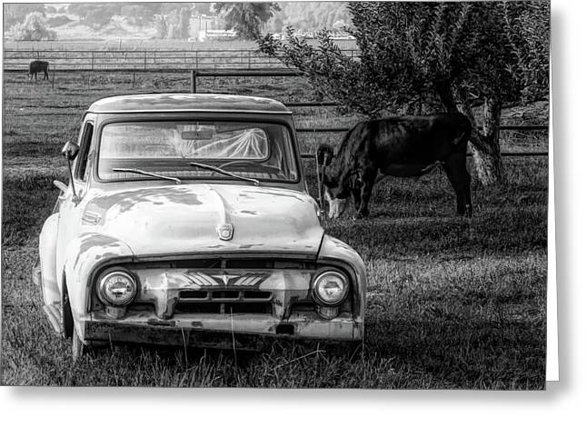 Truck And Cows Living Together Bw Greeting Card