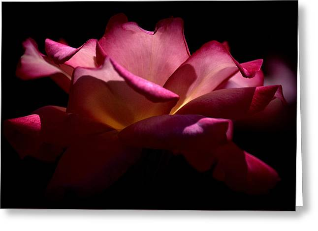 Greeting Card featuring the photograph True Beauty by Lori Seaman