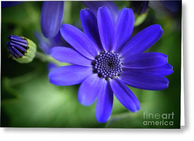 True Blue In The Garden Shadows Greeting Card by Dorothy Lee