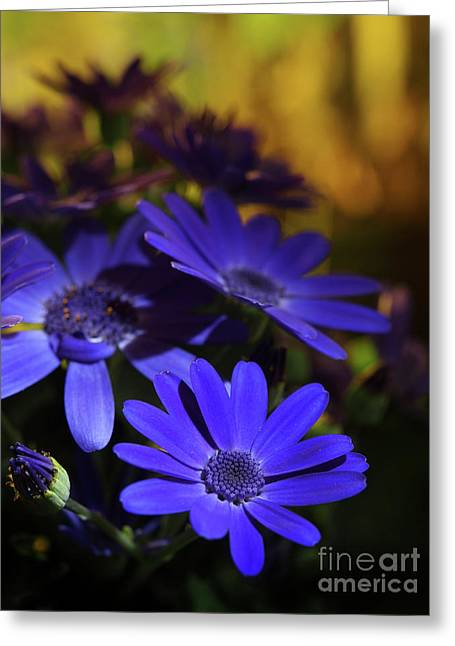 True Blue In The Late Afternoon Sunlight 2 Greeting Card by Dorothy Lee