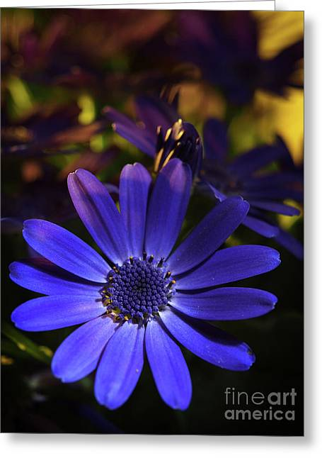 True Blue In The Late Afternoon Sunlight 3 Greeting Card by Dorothy Lee