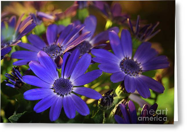 True Blue In The Late Afternoon Sunlight Greeting Card by Dorothy Lee