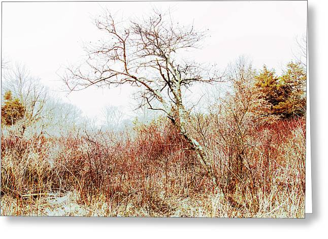 Trumbauersville Walking Path Greeting Card by Mother Nature