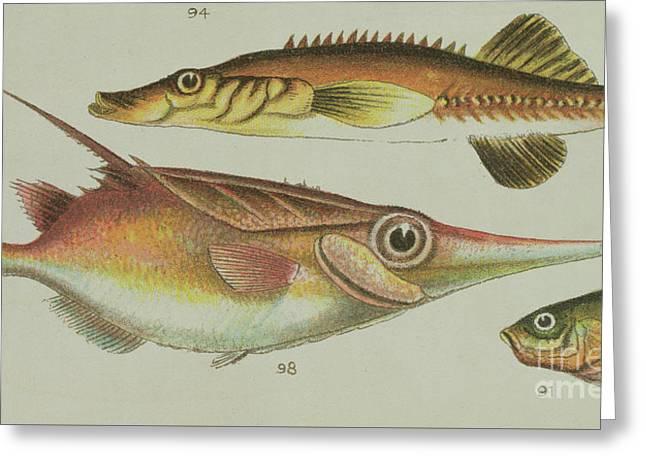 Trumpet Fish Greeting Card