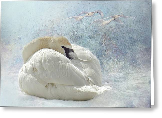 Trumpeter Textures #1 - Swan Feather Greeting Card