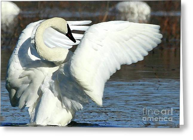 Trumpeter Swan Greeting Card by Paula Guttilla
