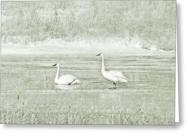 Greeting Card featuring the photograph Trumpeter Swan's Winter Rest Green by Jennie Marie Schell