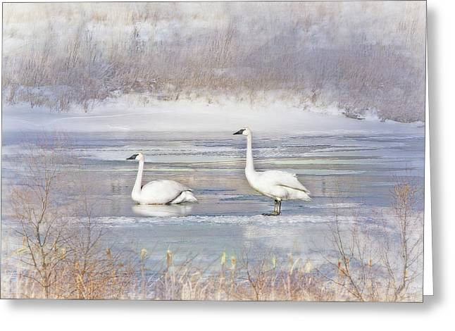 Greeting Card featuring the photograph Trumpeter Swan's Winter Rest by Jennie Marie Schell