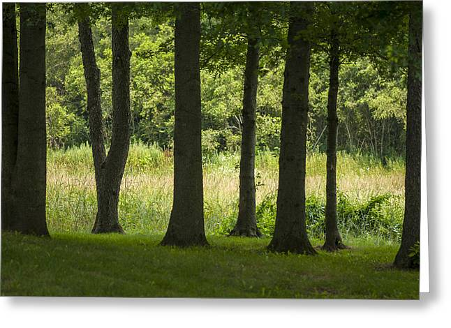 Trunks In A Row Greeting Card