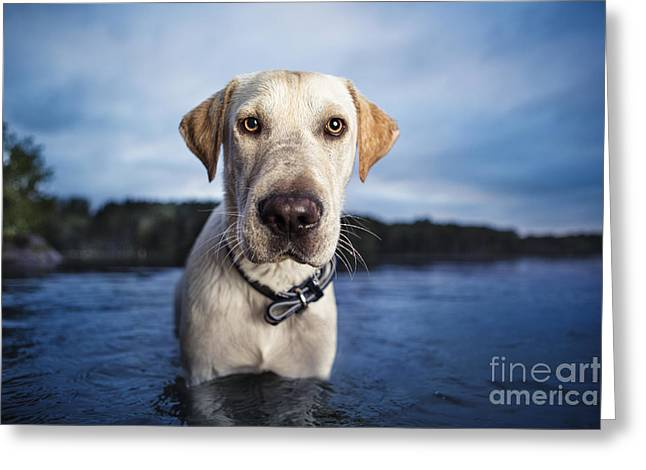 Tucker Greeting Card by Leslie Leda