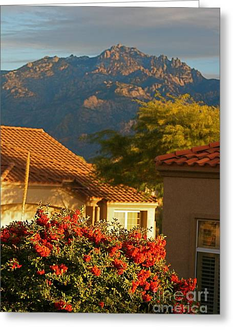 Tucson Beauty Greeting Card by Nadine Rippelmeyer
