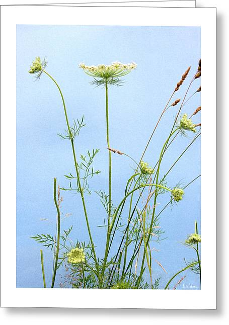 Tuft Of Queen Anne's Lace Greeting Card