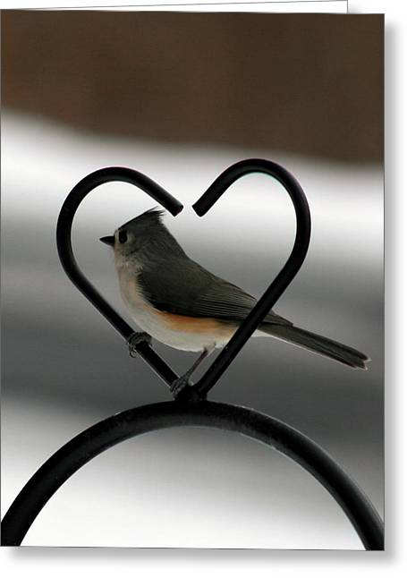 Tufted Titmouse In A Heart Greeting Card by George Jones