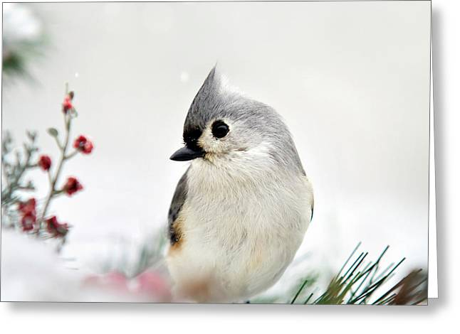 Tufted Titmouse Square Greeting Card
