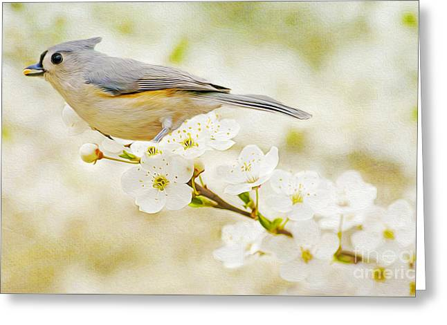 Tufted Titmouse With Seed Greeting Card