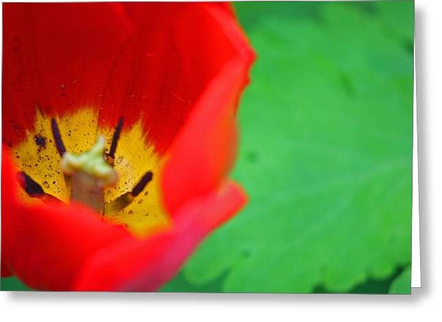 Tulip 003 Greeting Card by Bobby Villapando