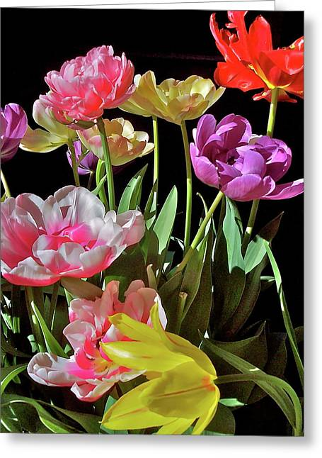 Tulip 8 Greeting Card by Pamela Cooper