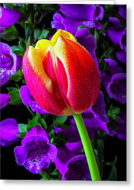 Tulip And Foxglove Greeting Card by Garry Gay