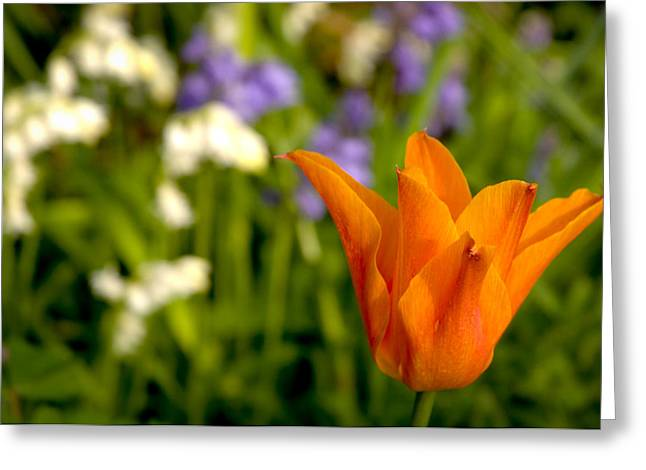 Tulip And Friends L Greeting Card by Andy Smy