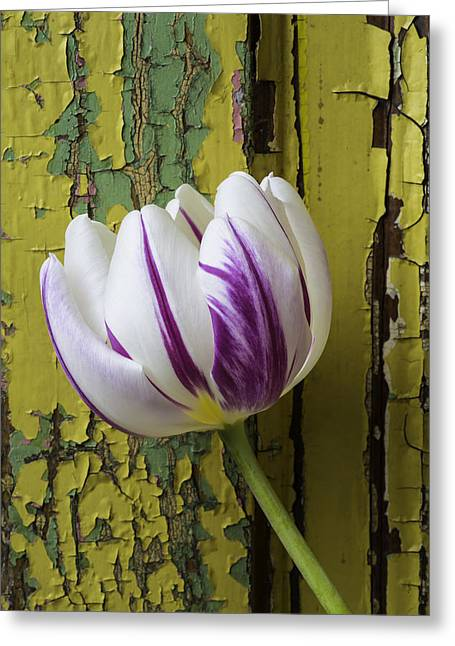 Tulip And Old Wall Greeting Card by Garry Gay