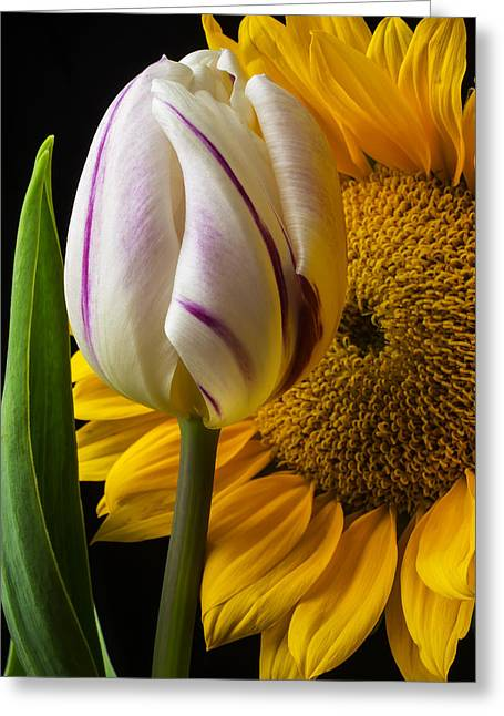Tulip And Sunflower Greeting Card by Garry Gay