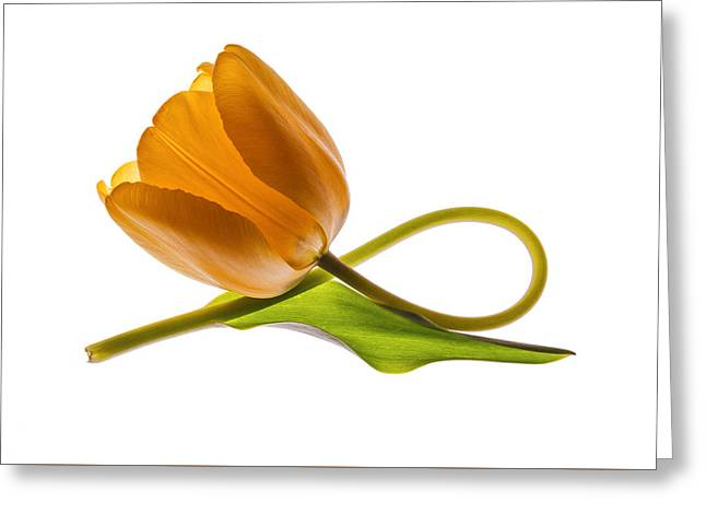 Tulip Art On White Background Greeting Card by Vishwanath Bhat