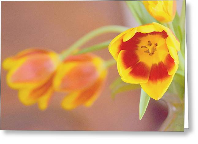 Greeting Card featuring the photograph Tulip Beauty by Deborah  Crew-Johnson