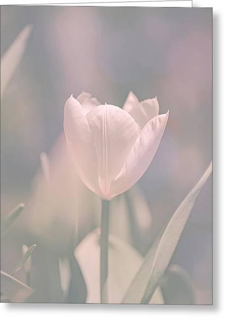 Tulip Greeting Card by Bob Orsillo