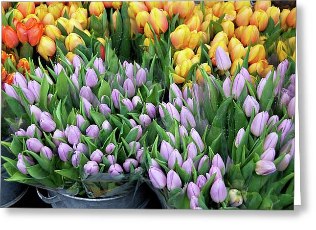Tulip Bouquets For Sale Greeting Card by JAMART Photography