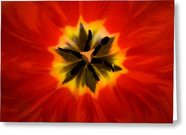 Tulip Explosion Kaleidoscope Greeting Card by Teresa Mucha