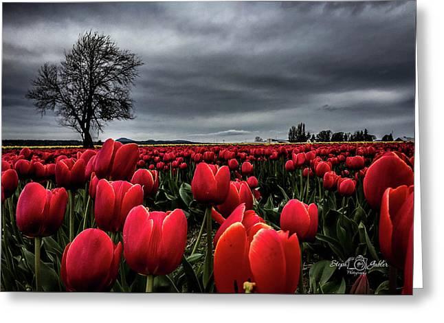 Tulip Fields Greeting Card